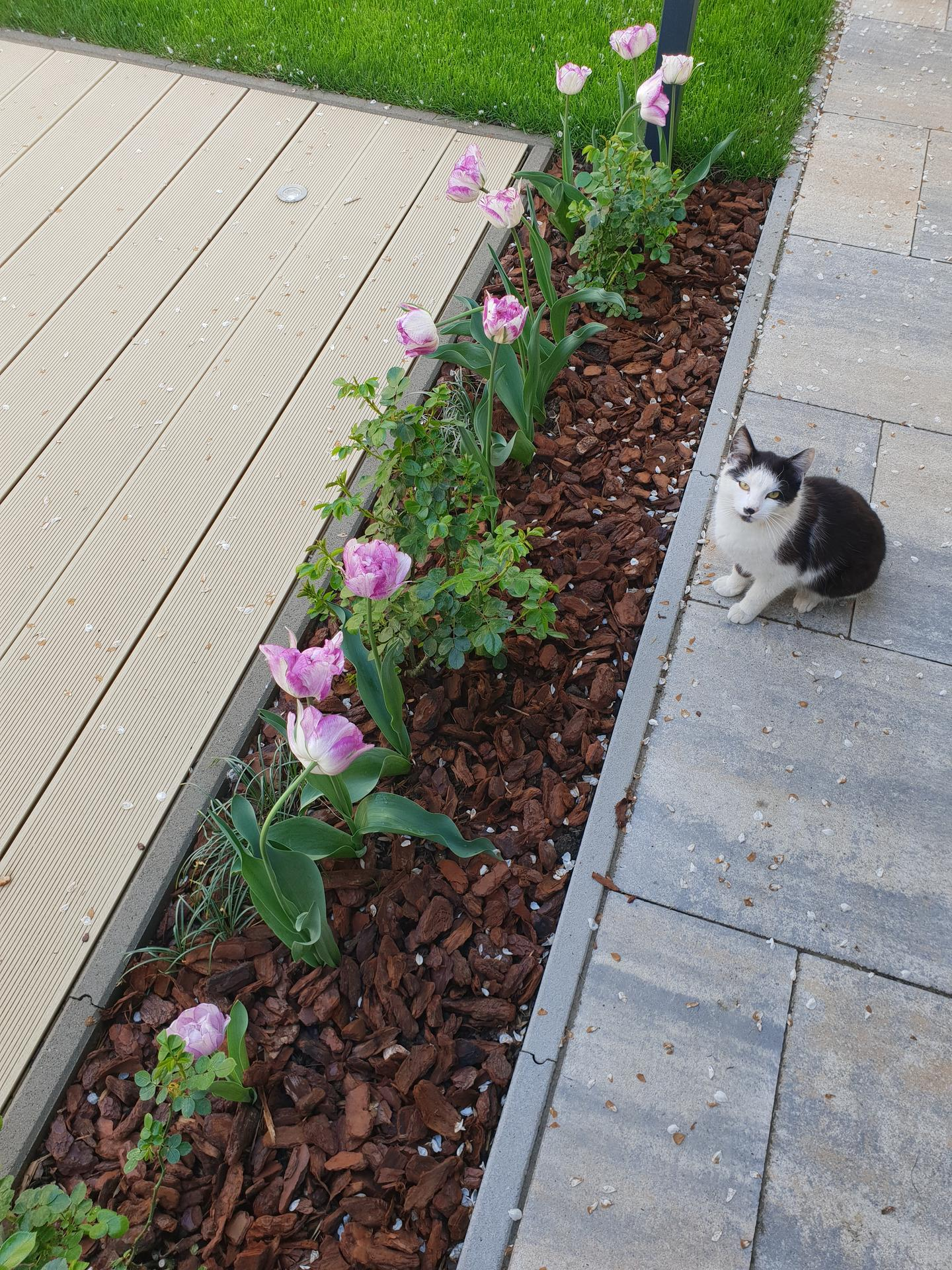 Dvor a záhradka - Obrázok č. 4