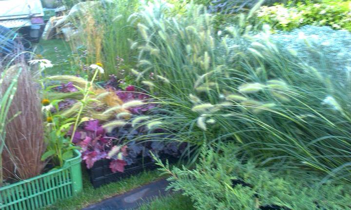 Dalsia zahradka - Obrázok č. 8