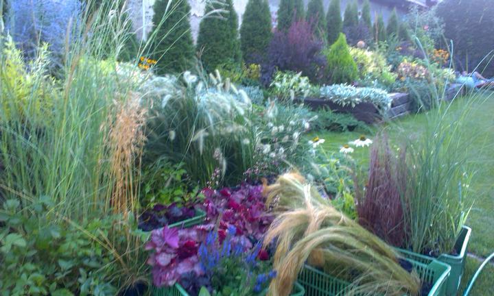 Dalsia zahradka - Obrázok č. 9