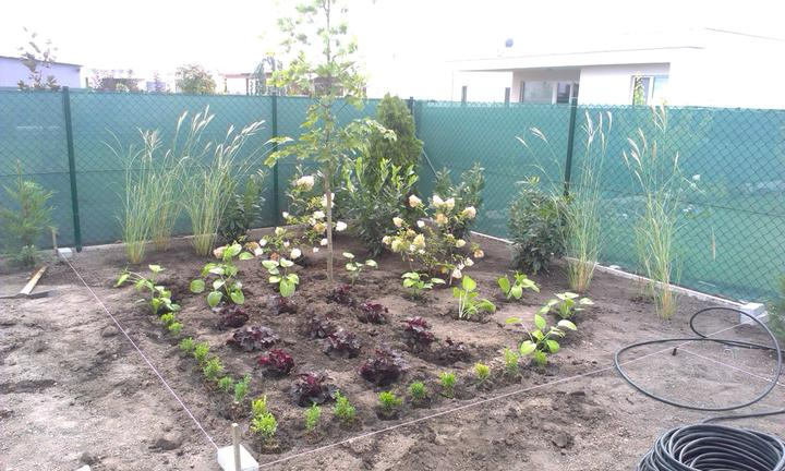 Dalsia zahradka - Obrázok č. 10