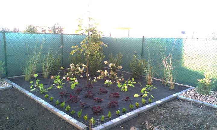 Dalsia zahradka - Obrázok č. 22