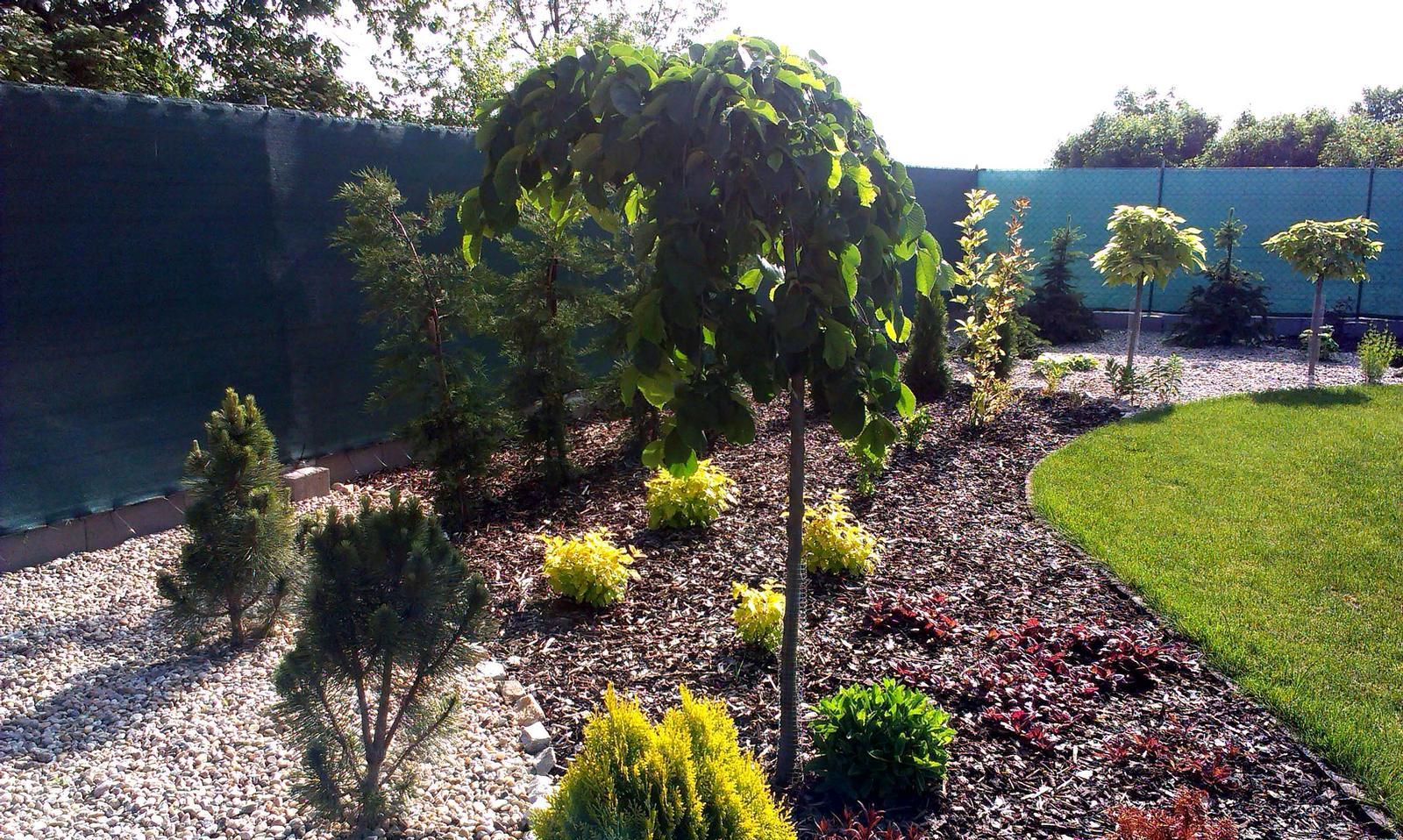 Záhrada s veľkou skalkou - Obrázok č. 40