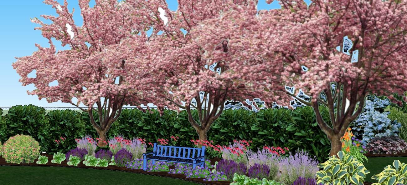 3D navrh zahradky - len pre info...kvitnuce sakury sa s echinaceou v reale nestretnu v kvitnuti