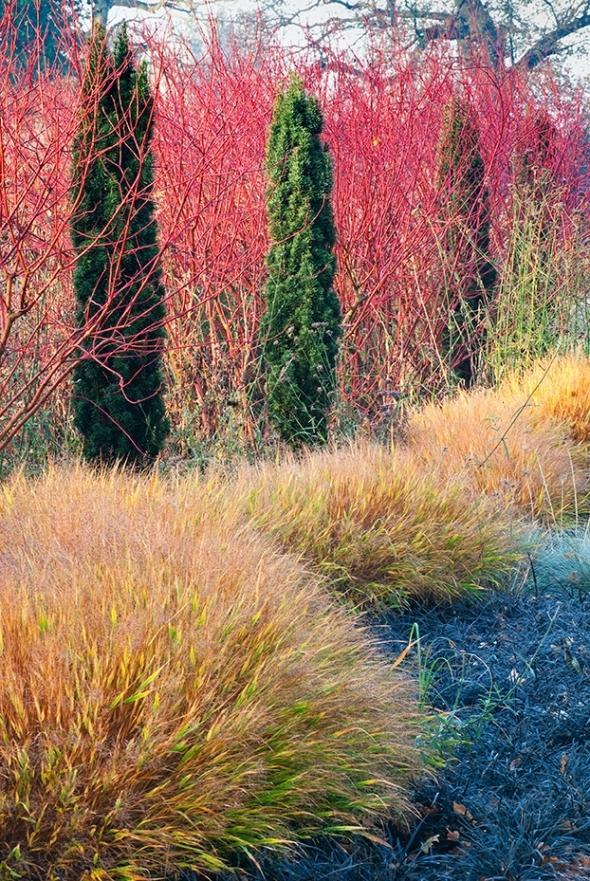 Zahony a rastliny do polotiena,tiena... - jesen