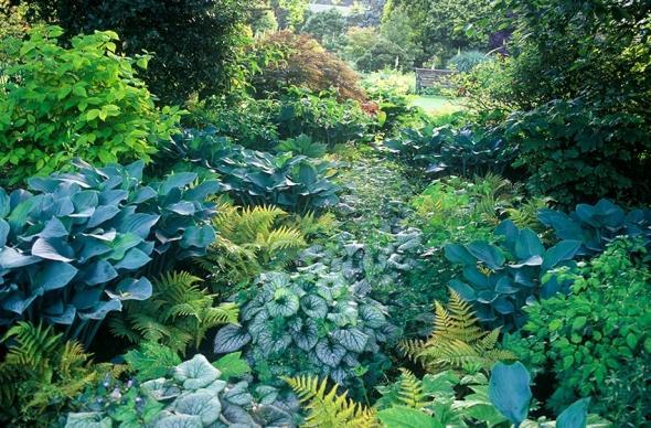 Zahony a rastliny do polotiena,tiena... - dryopteris erythrosaura/paprad/,brunnera,hosta