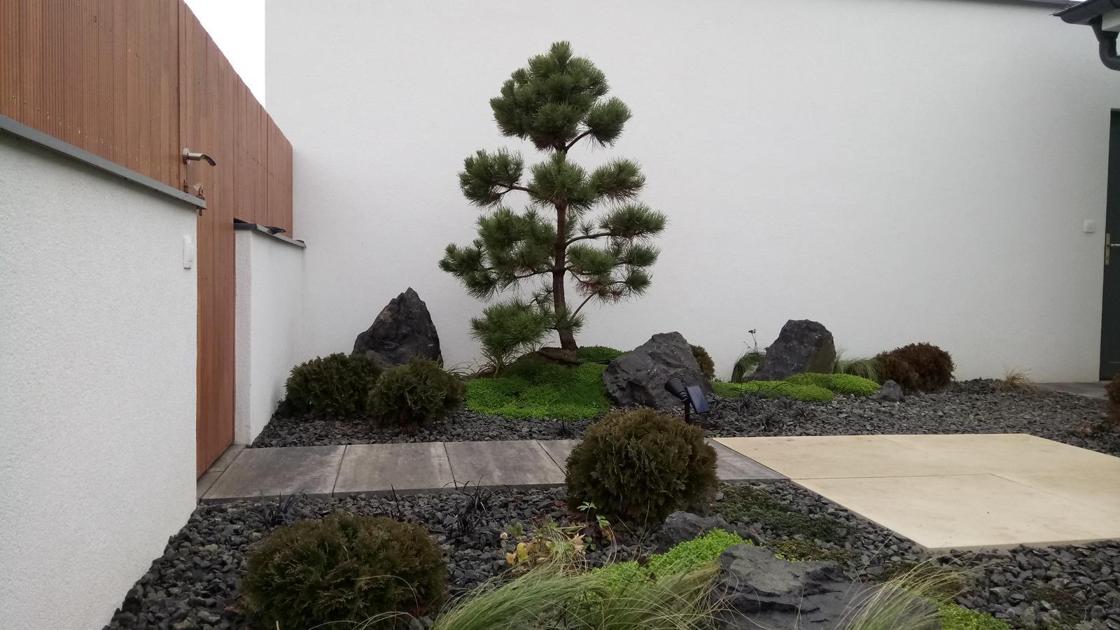 Zahrada 2017 - Obrázok č. 29