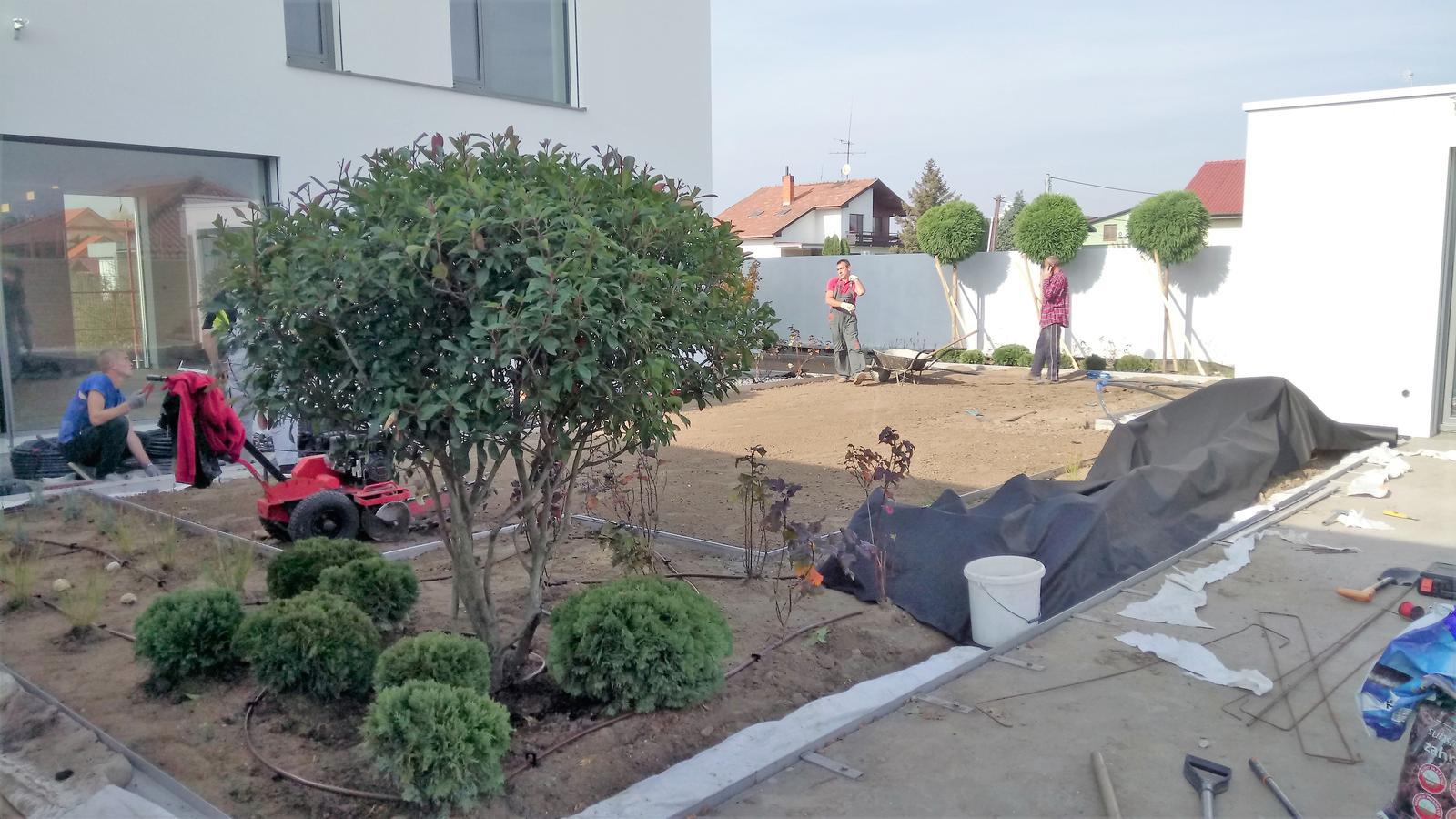 Zahrada 2017 - Obrázok č. 8