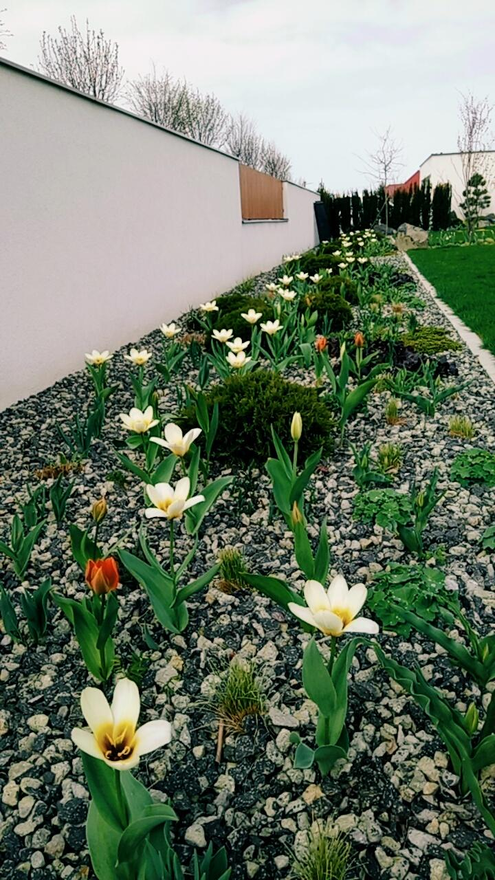 Zahrada 2017 - Konecne to uz zacina.. :) este cakam na ostatne, ach ta nedockavost :)