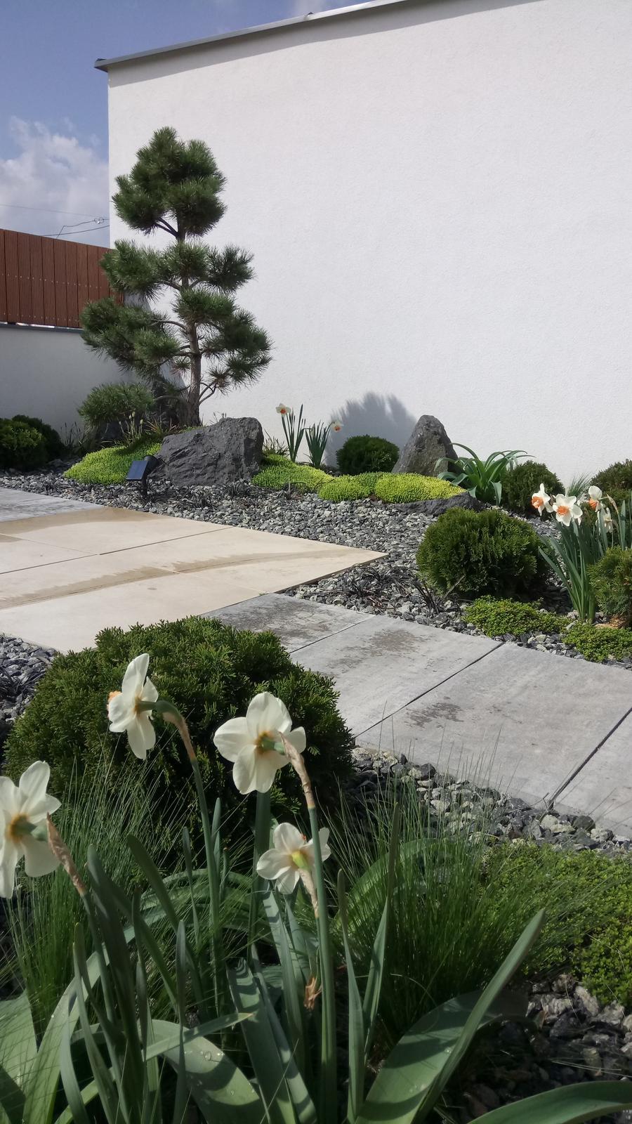 Zahrada 2017 - Obrázok č. 42