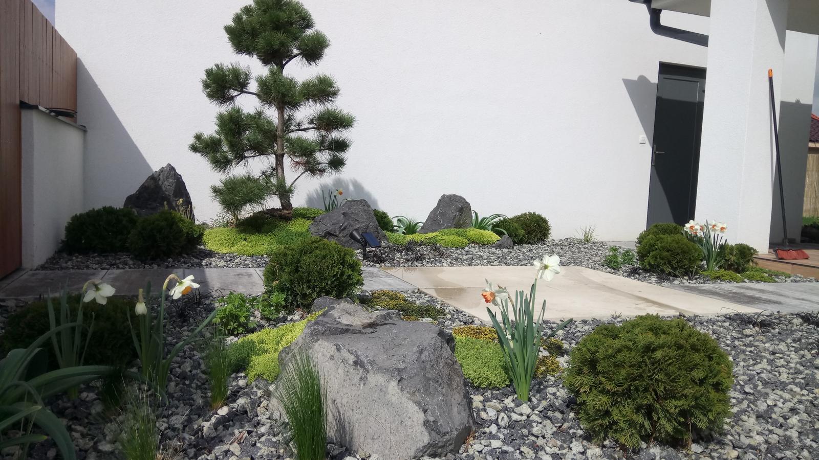 Zahrada 2017 - Obrázok č. 43