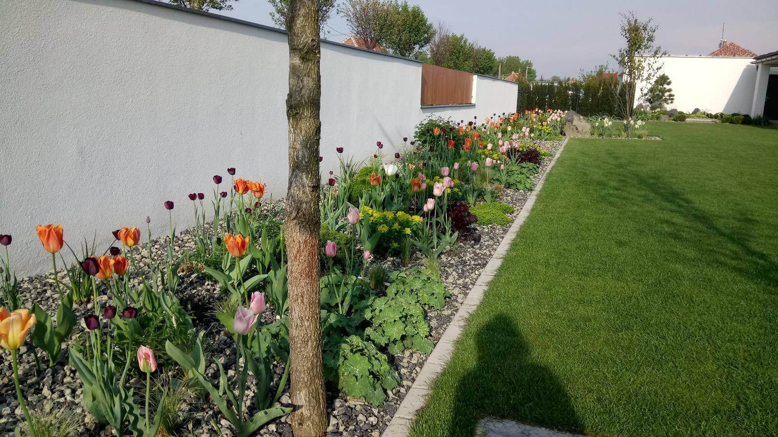 Zahrada 2017 - Obrázok č. 50