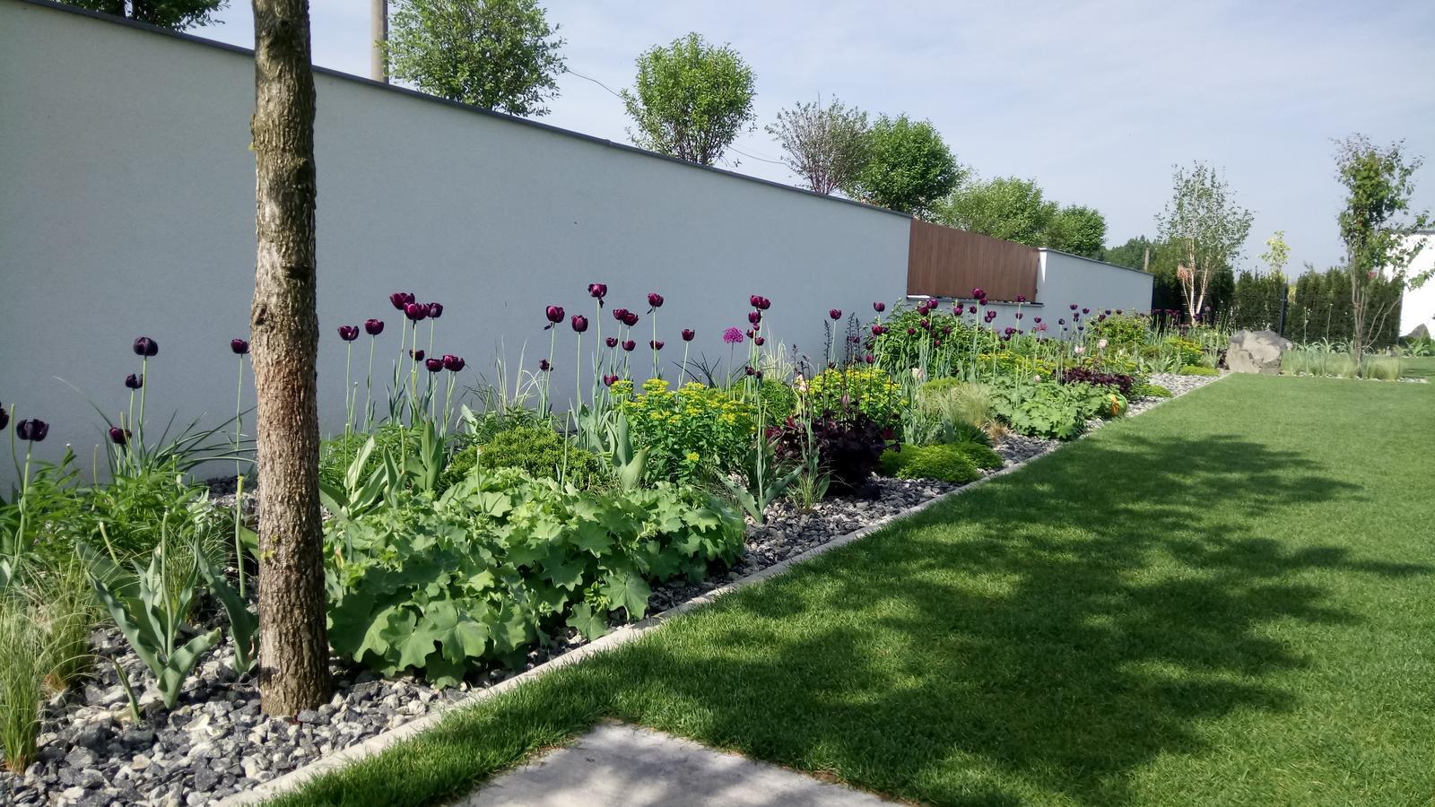Zahrada 2017 - Obrázok č. 54