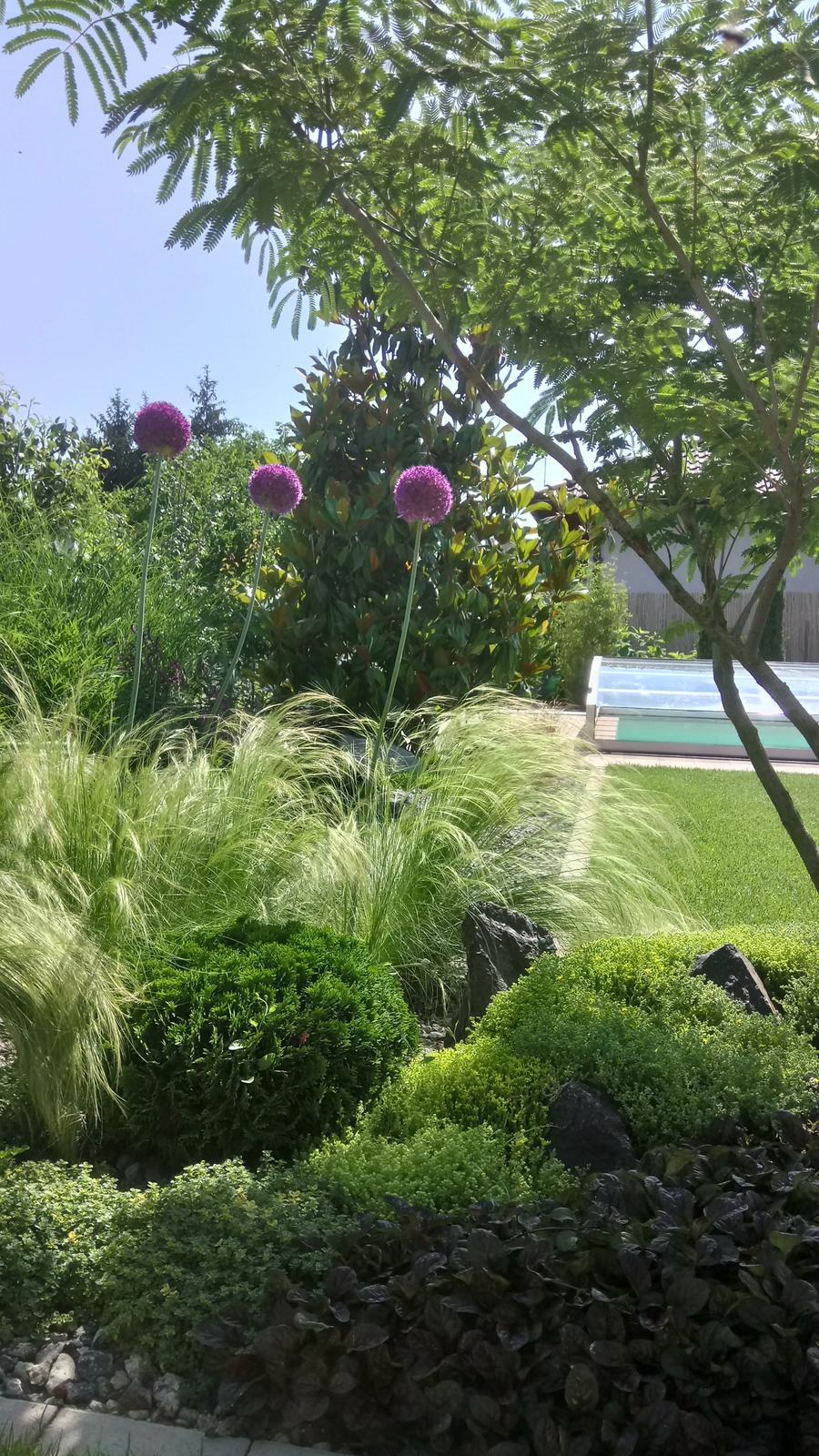 Zahrada 2017 - Obrázok č. 58
