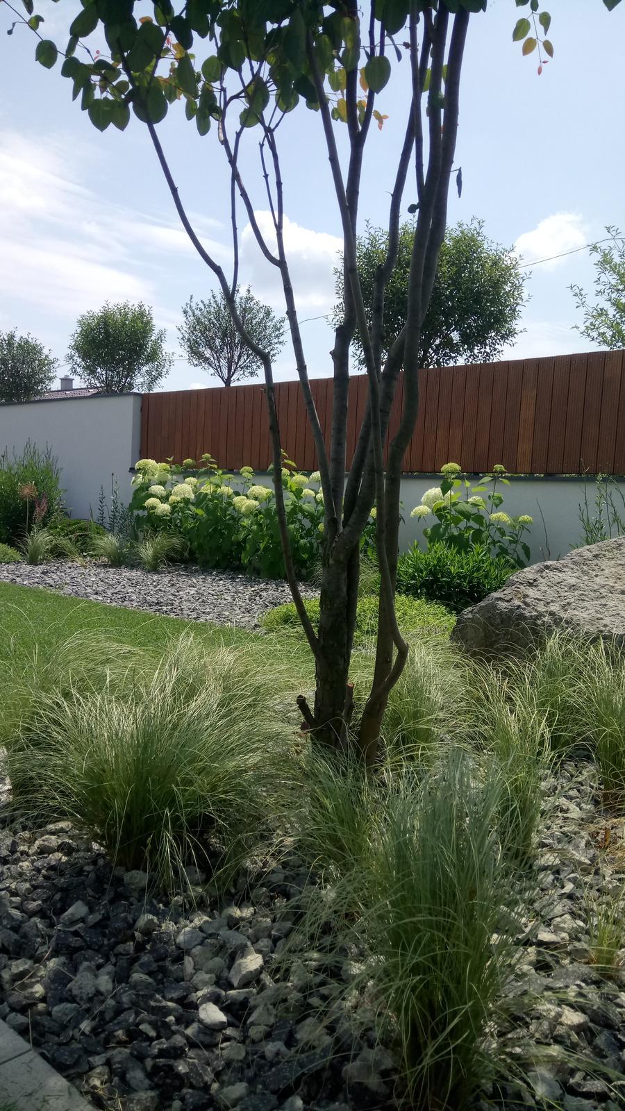 Zahrada 2017 - Obrázok č. 64