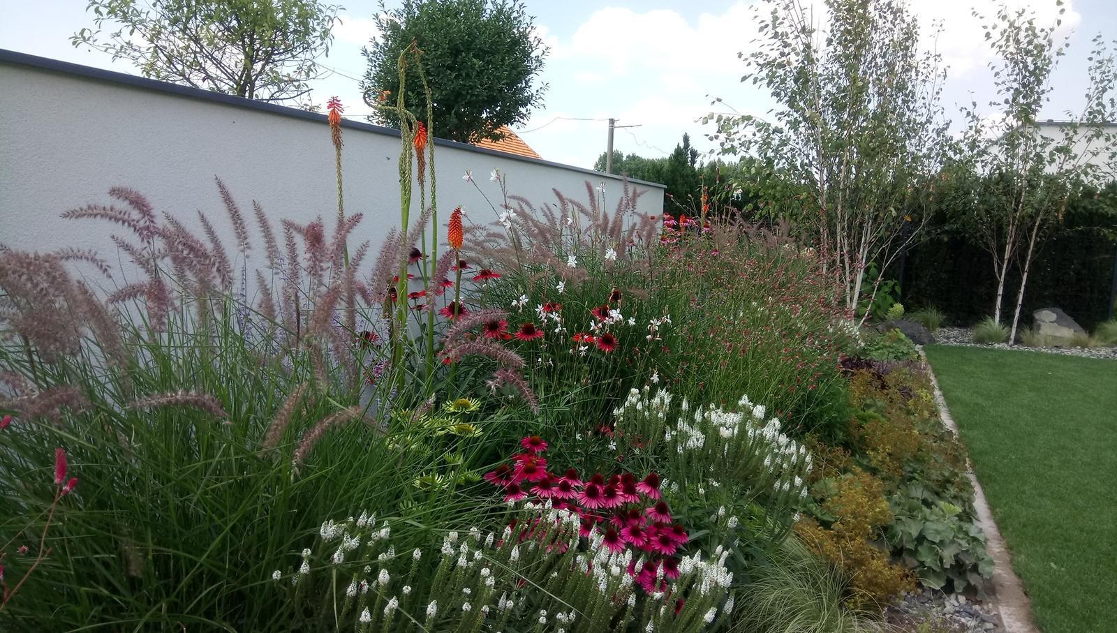 Zahrada 2017 - Obrázok č. 72
