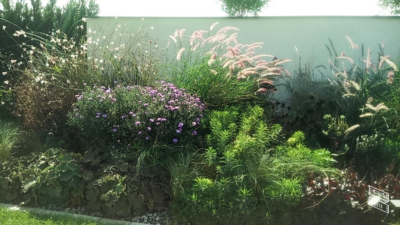 Zahrada 2017 - Obrázok č. 80