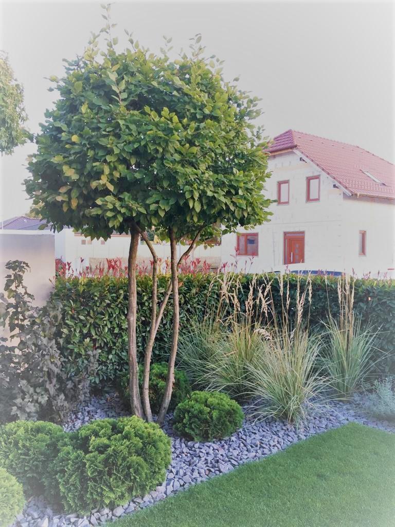 Zahrada 2017 - Obrázok č. 1