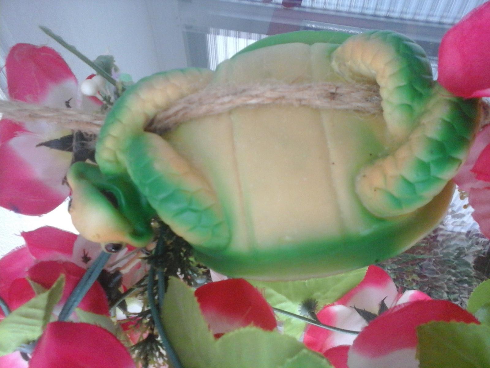 želva kvetinače - Obrázok č. 1