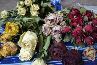 Zbieram si ružičky usušené, určite sa niekde využijú