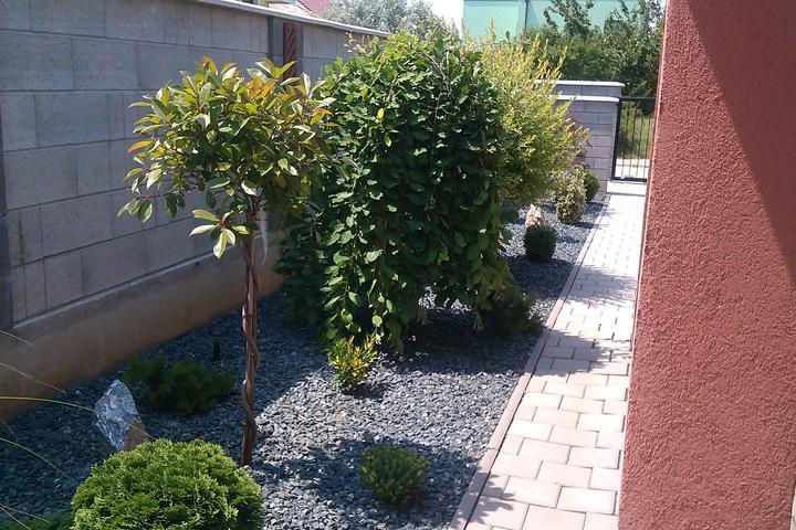 Moje stromčeky, terasa :) - photinia