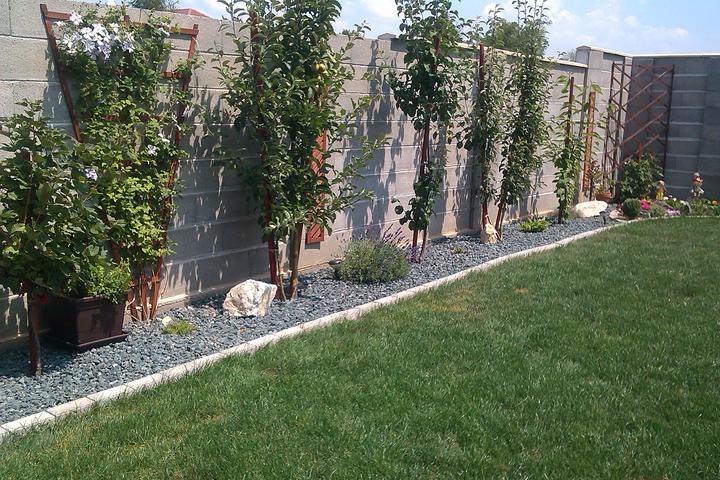 Moje stromčeky, terasa :) - stľpové ovocné stromčeky:) - r. 2013