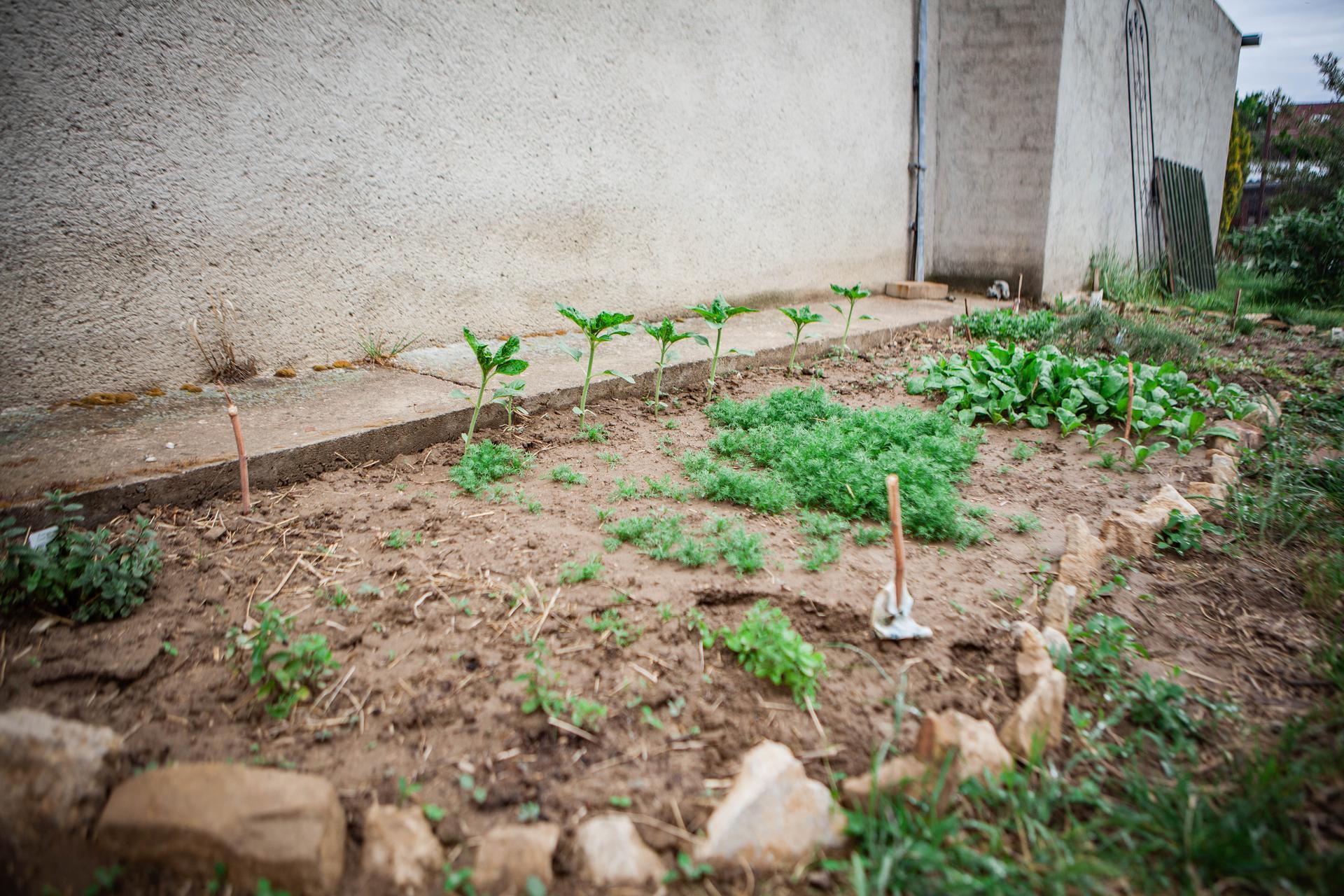 U nas v zahrade v roku 2020 - Obrázok č. 6