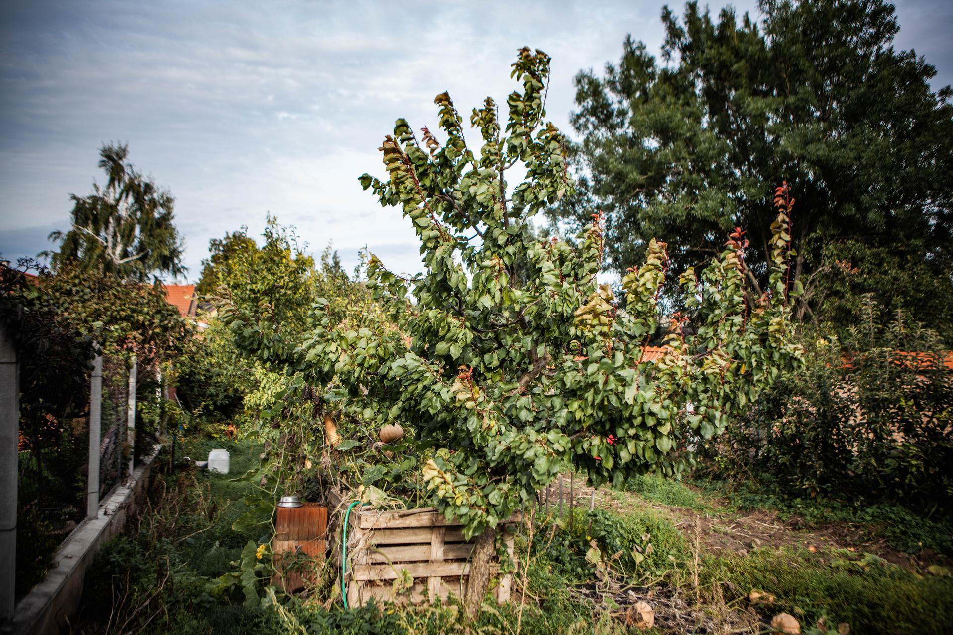 U nas v zahrade v roku 2020 - oktober - uzitkova cast zahrady. na zber cakaju uz len tekvice