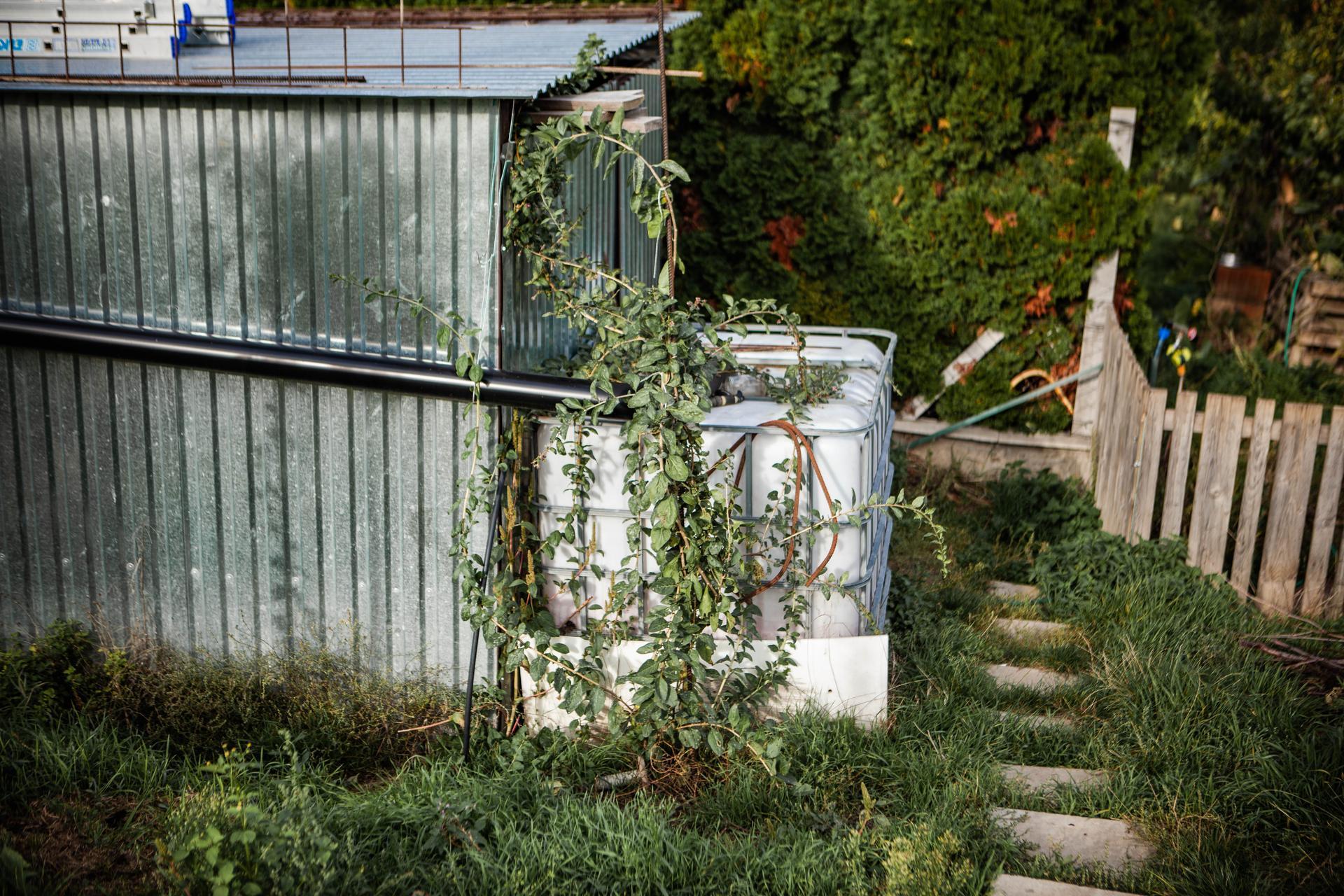 U nas v zahrade v roku 2020 - Goji na jar sadene ma za ulohu skryt nam tu plechovu budu a rovnako vedla aj cernice. len tym sa tak rychlo nechce :D