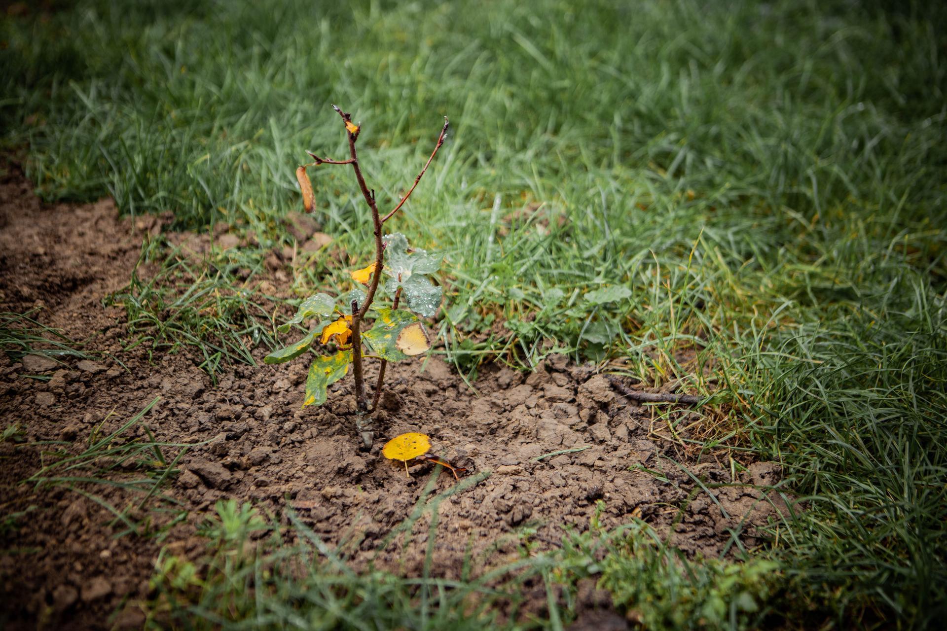 U nas v zahrade v roku 2020 - muchovnik ako vetrolam