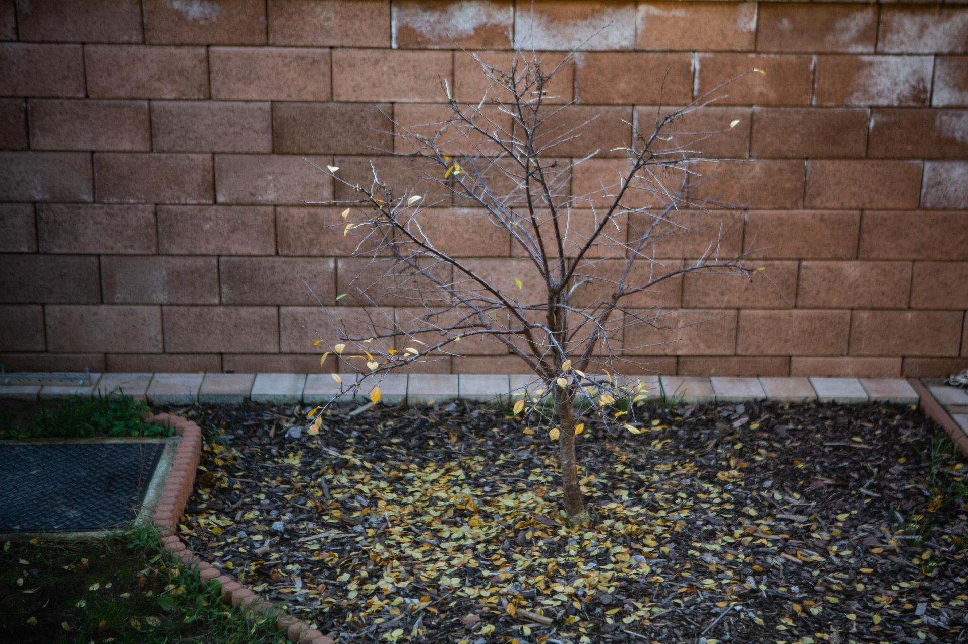 U nas v zahrade v roku 2020 - Jesen zavitala aj do predzahradky