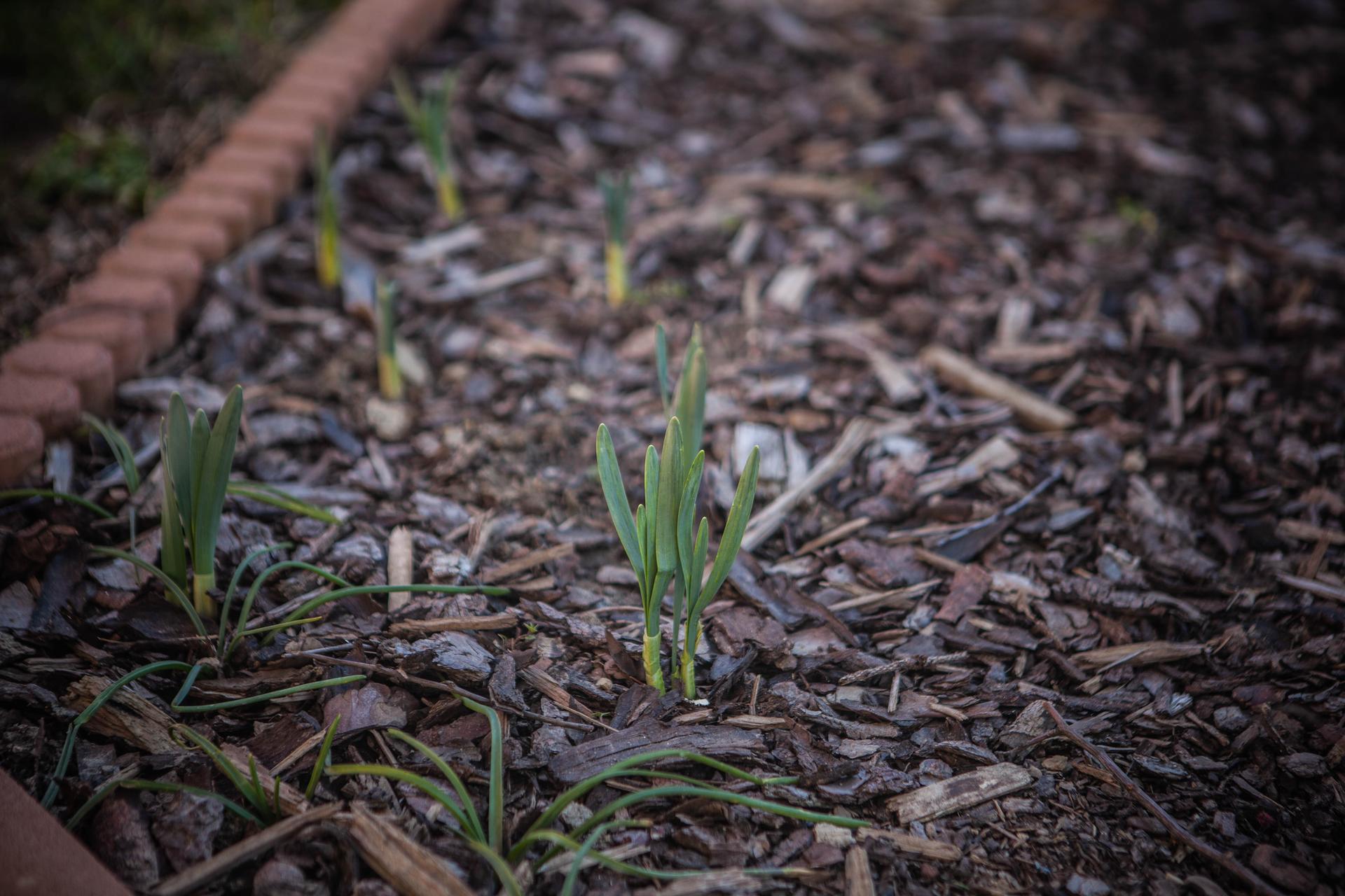 U nas v zahrade v roku 2021 - Obrázok č. 7