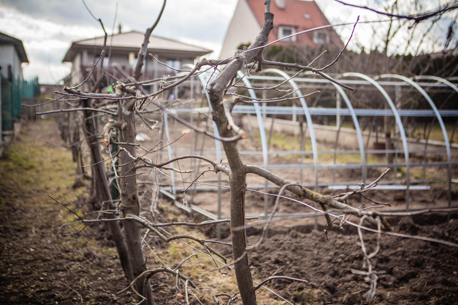 U nas v zahrade v roku 2021 - jablonky stare - este im davame dva az tri roky a prestanu rodit :(