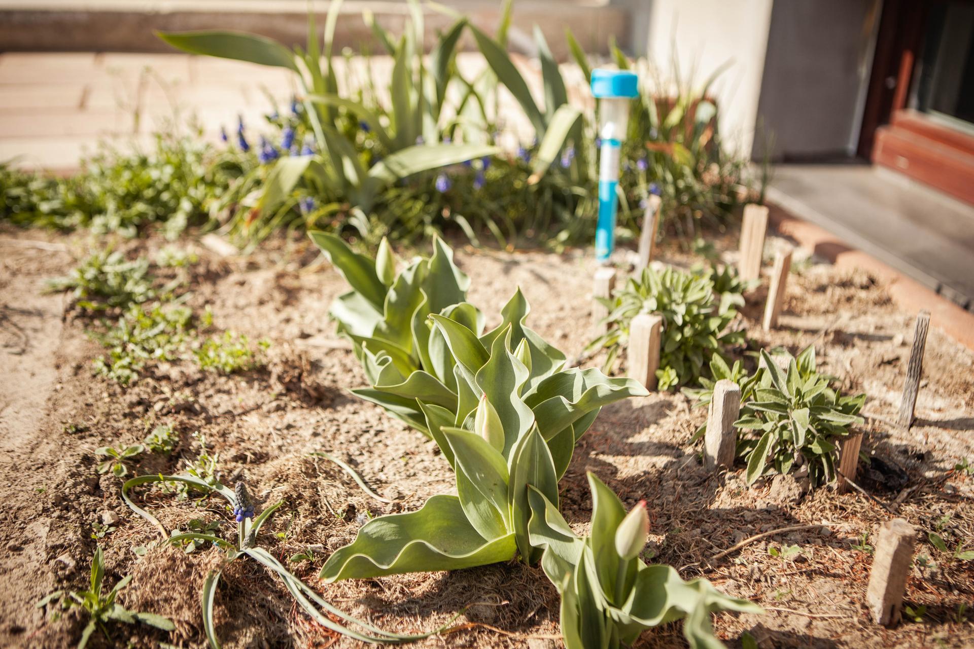 U nas v zahrade v roku 2021 - Obrázok č. 31