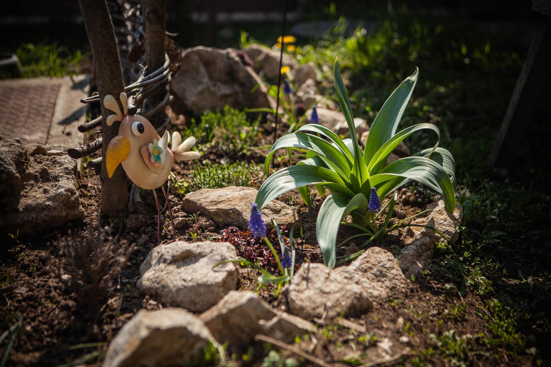 U nas v zahrade v roku 2021 - Obrázok č. 41