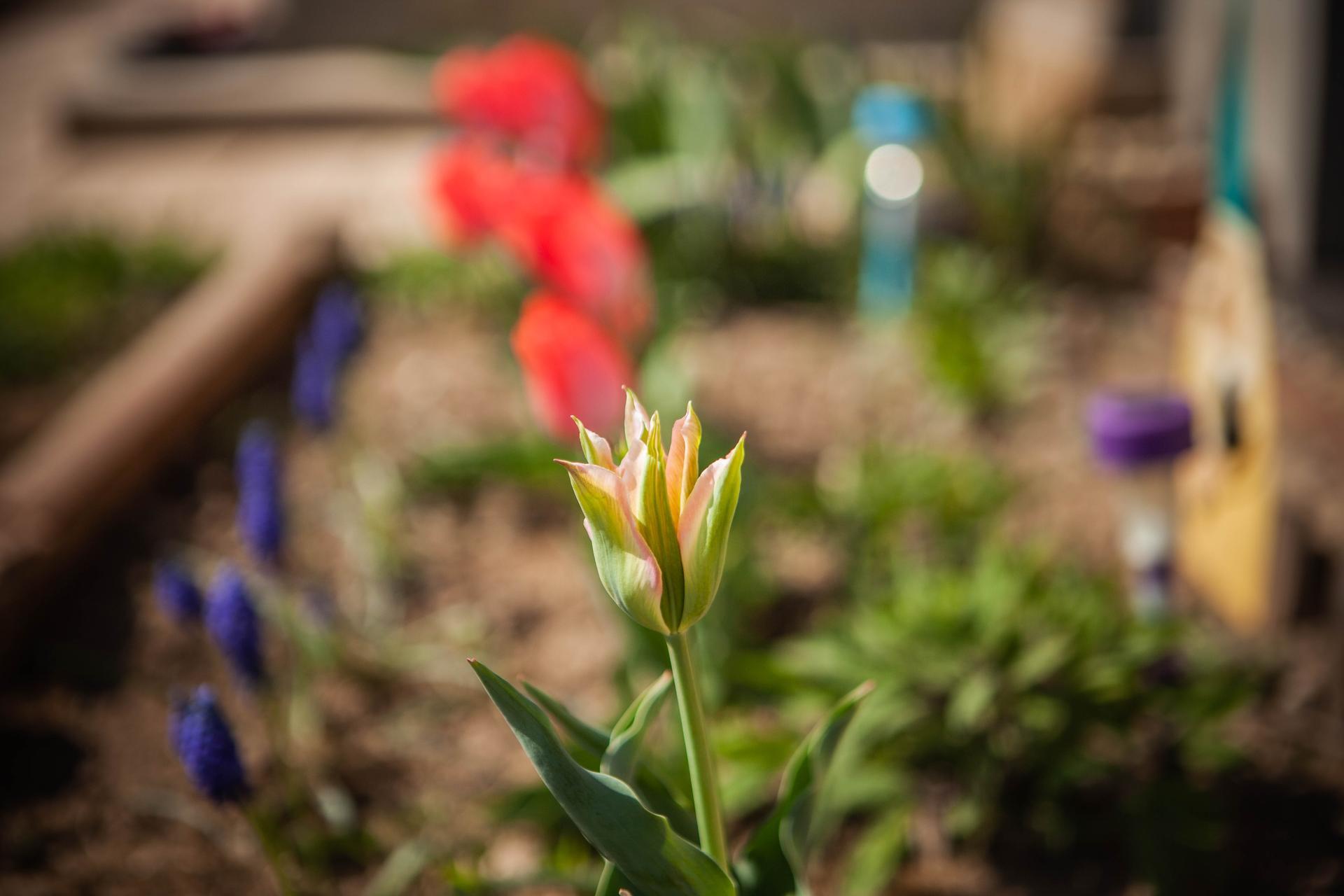 U nas v zahrade v roku 2021 - Obrázok č. 40