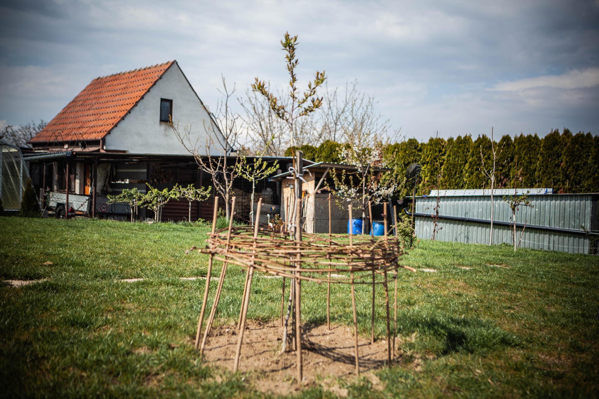 U nas v zahrade v roku 2021 - mispula a pod nou zasiate jedle kvety