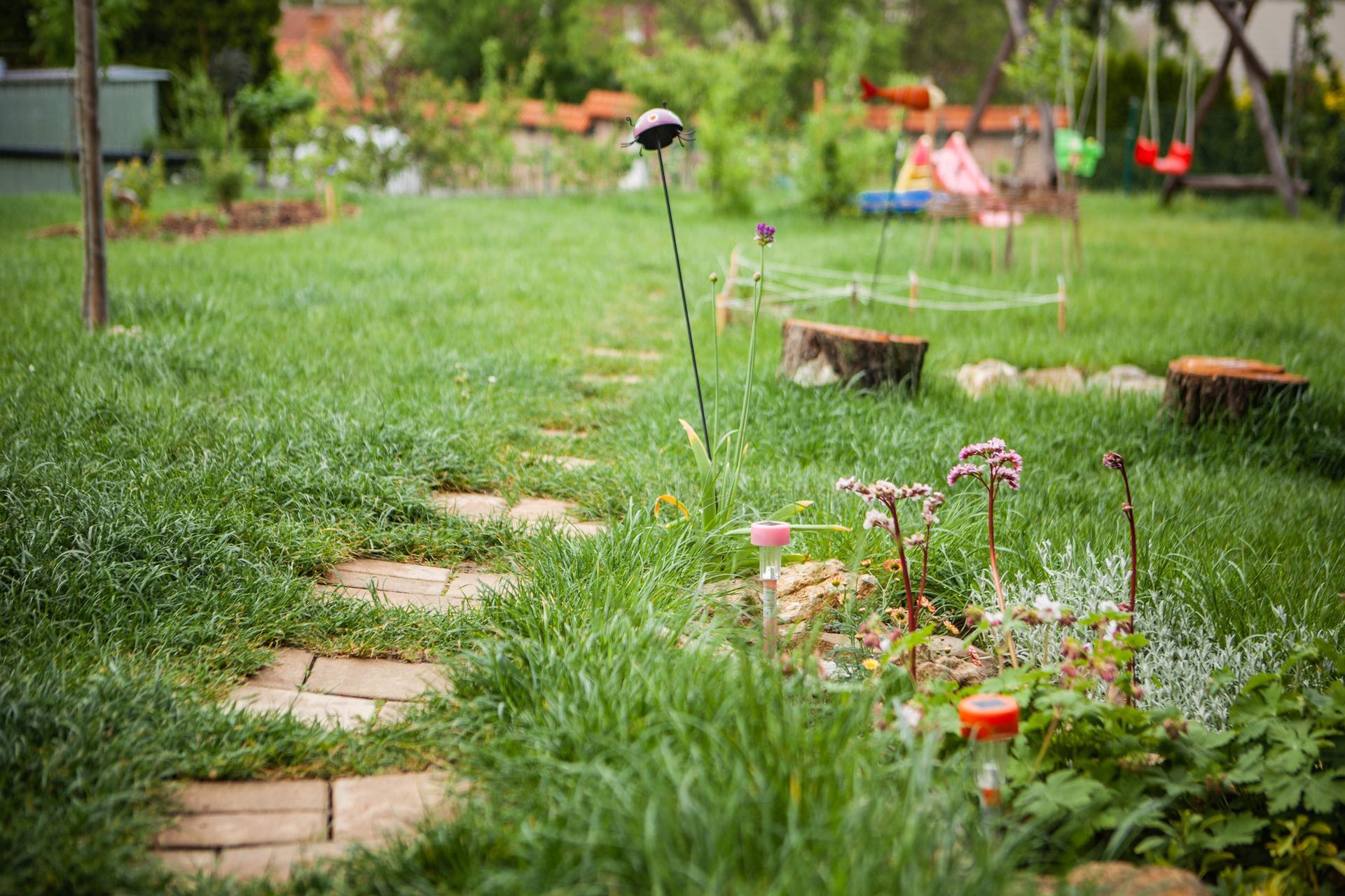 U nas v zahrade v roku 2021 - pekne nam to po dazdoch bujnie, aj ta trava :-D