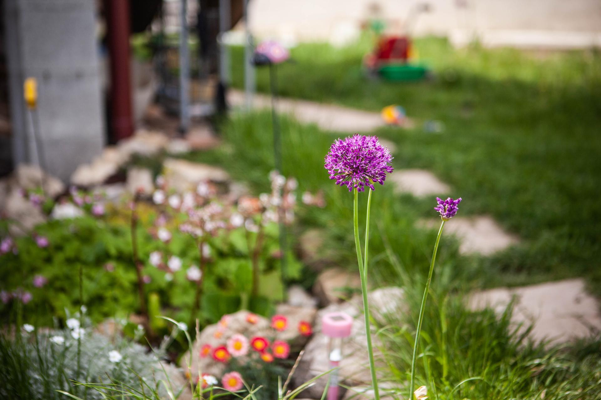 U nas v zahrade v roku 2021 - Obrázok č. 72