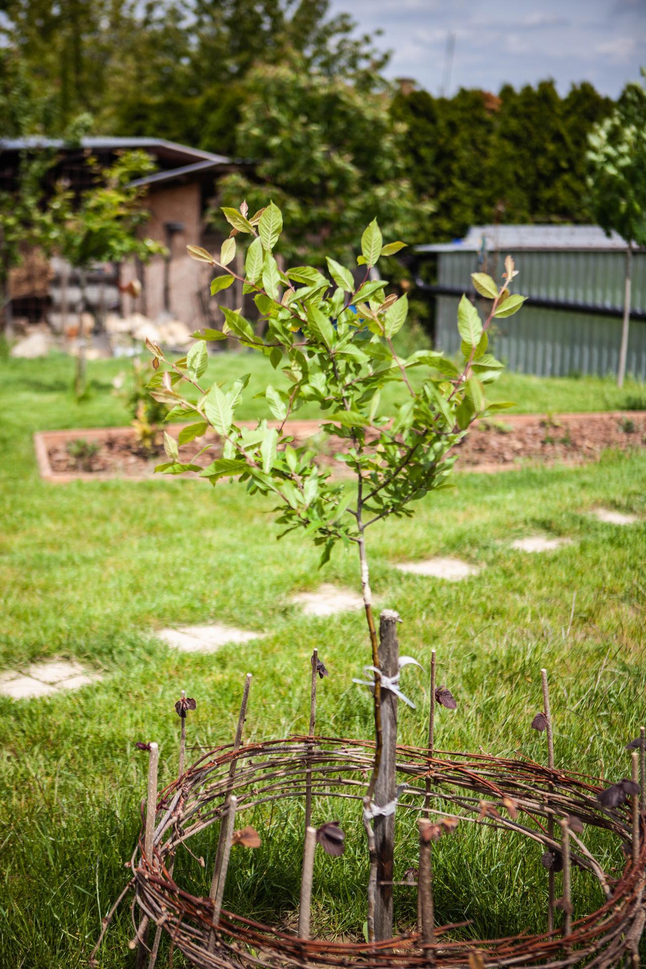 U nas v zahrade v roku 2021 - synova mispula