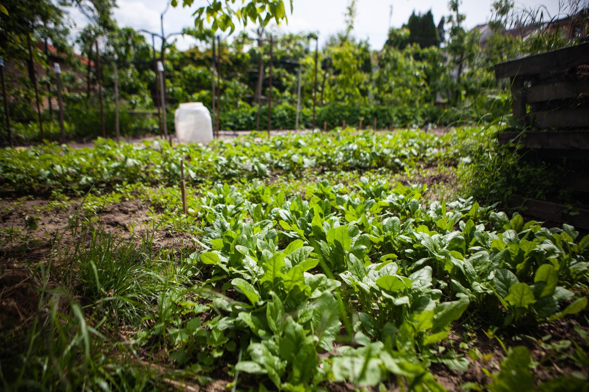 U nas v zahrade v roku 2021 - Obrázok č. 92