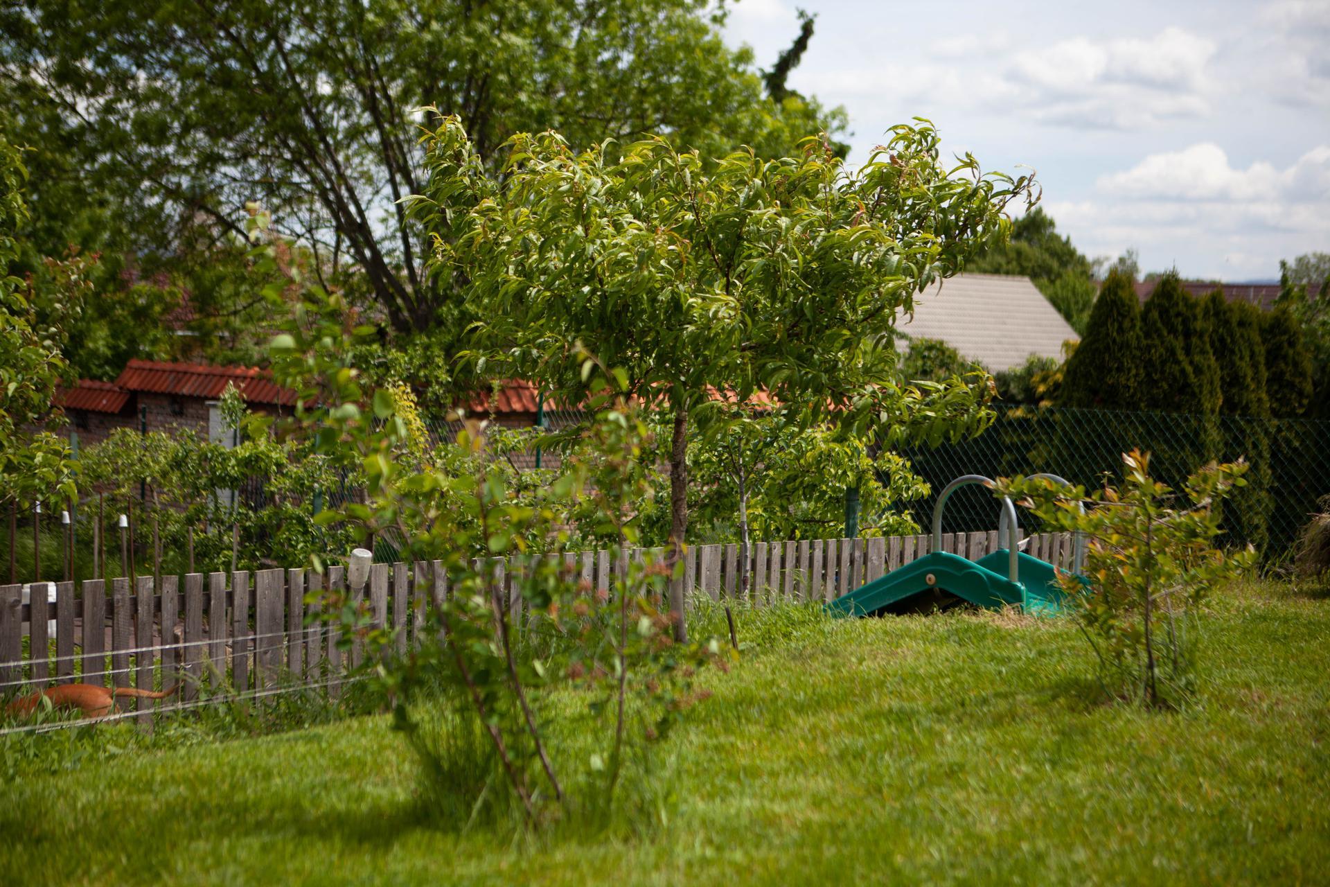 U nas v zahrade v roku 2021 - muchovnik, broskyna a zemolez