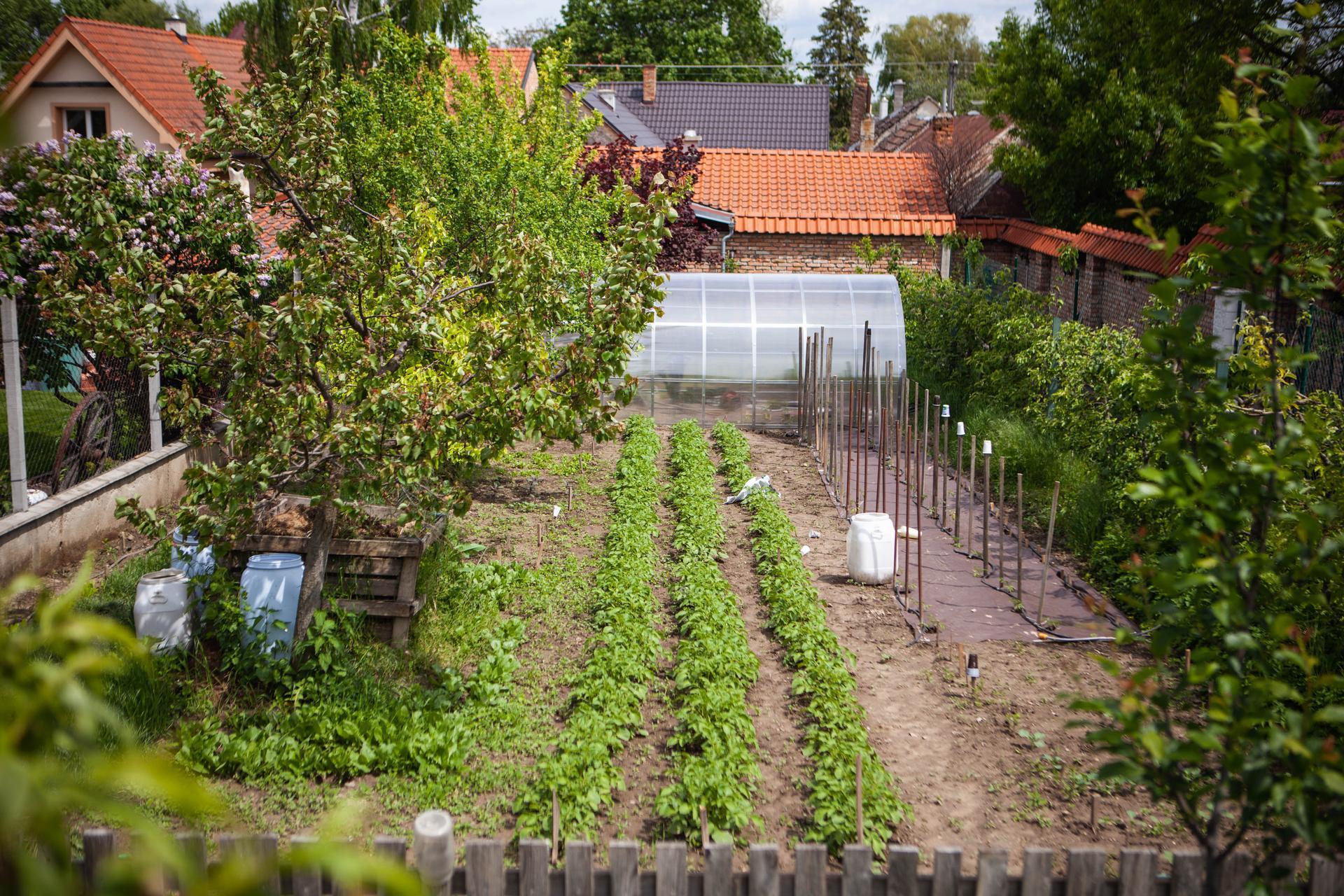 U nas v zahrade v roku 2021 - Obrázok č. 86