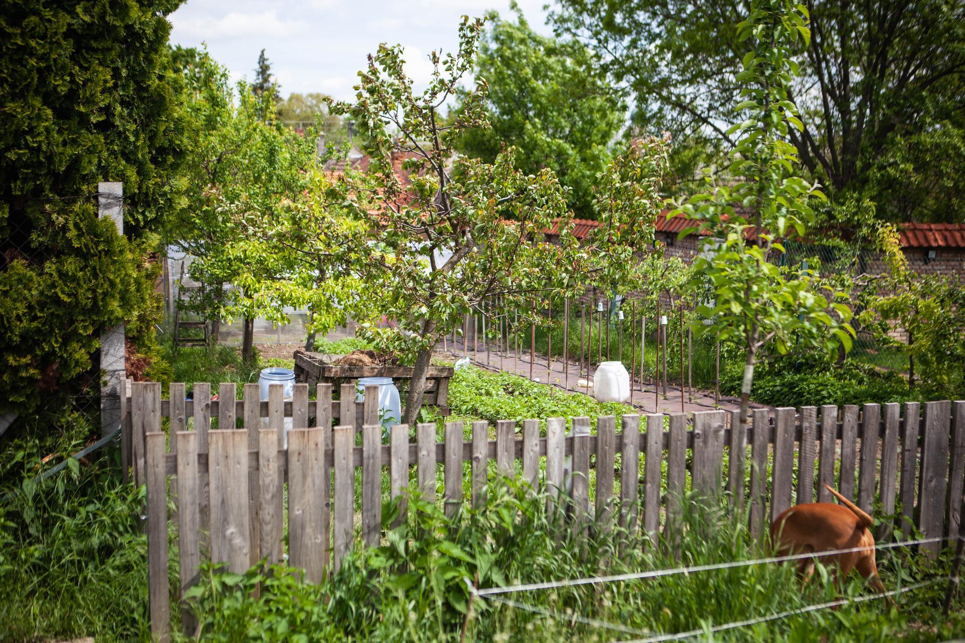 U nas v zahrade v roku 2021 - Obrázok č. 87