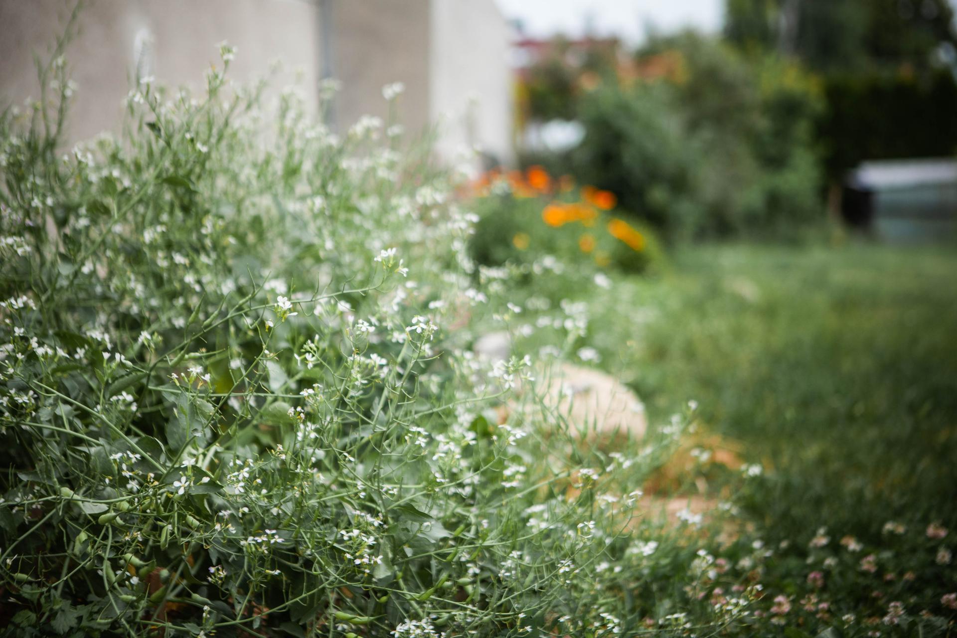 U nas v zahrade v roku 2021 - Obrázok č. 122