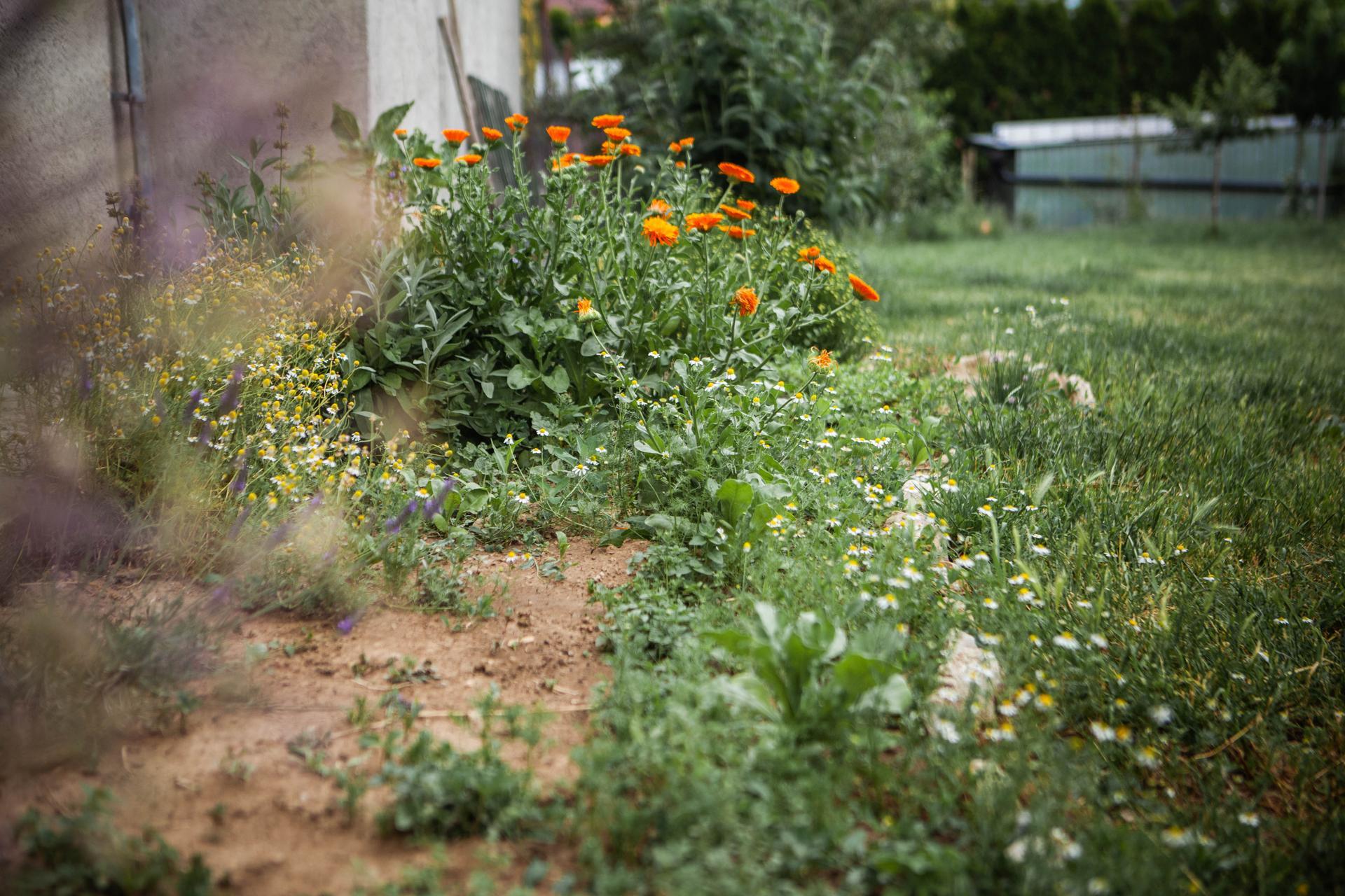 U nas v zahrade v roku 2021 - Obrázok č. 123
