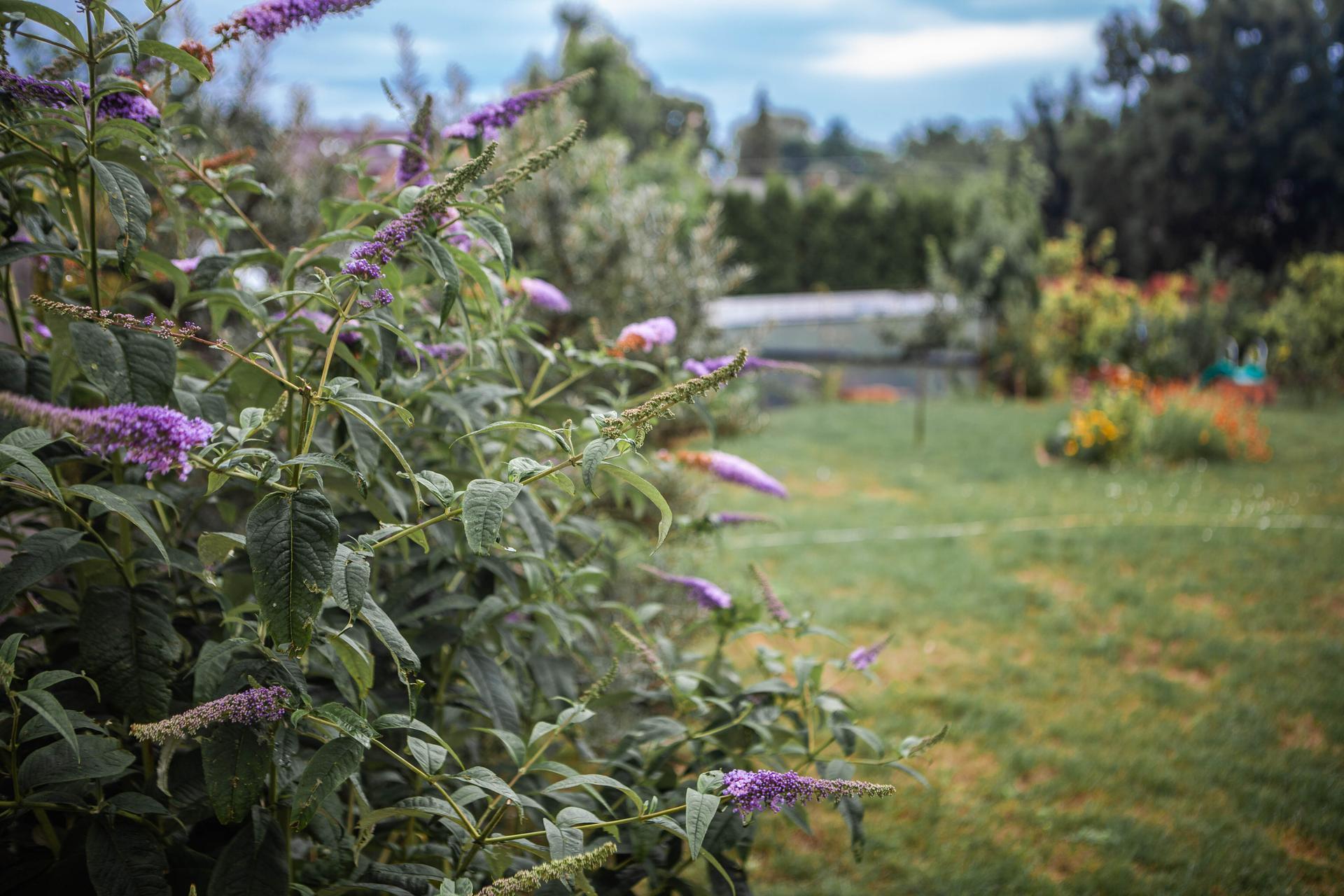 U nas v zahrade v roku 2021 - Obrázok č. 170