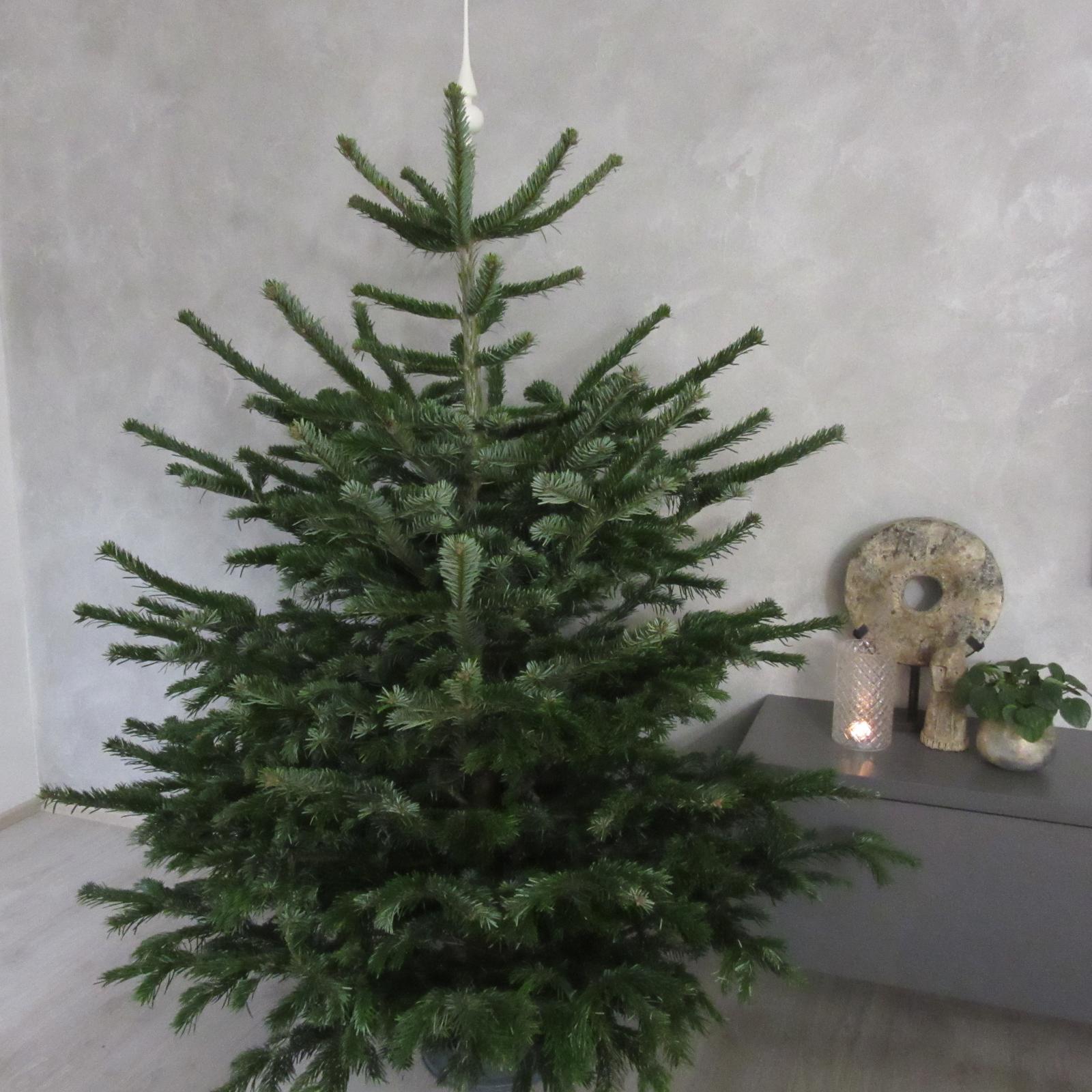 Advent a čas vánoční 2020 - u nás zatím ve stojanu, čeká na zdobení:)