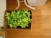 Vázy a kytičky - papírové kytky na stůl,