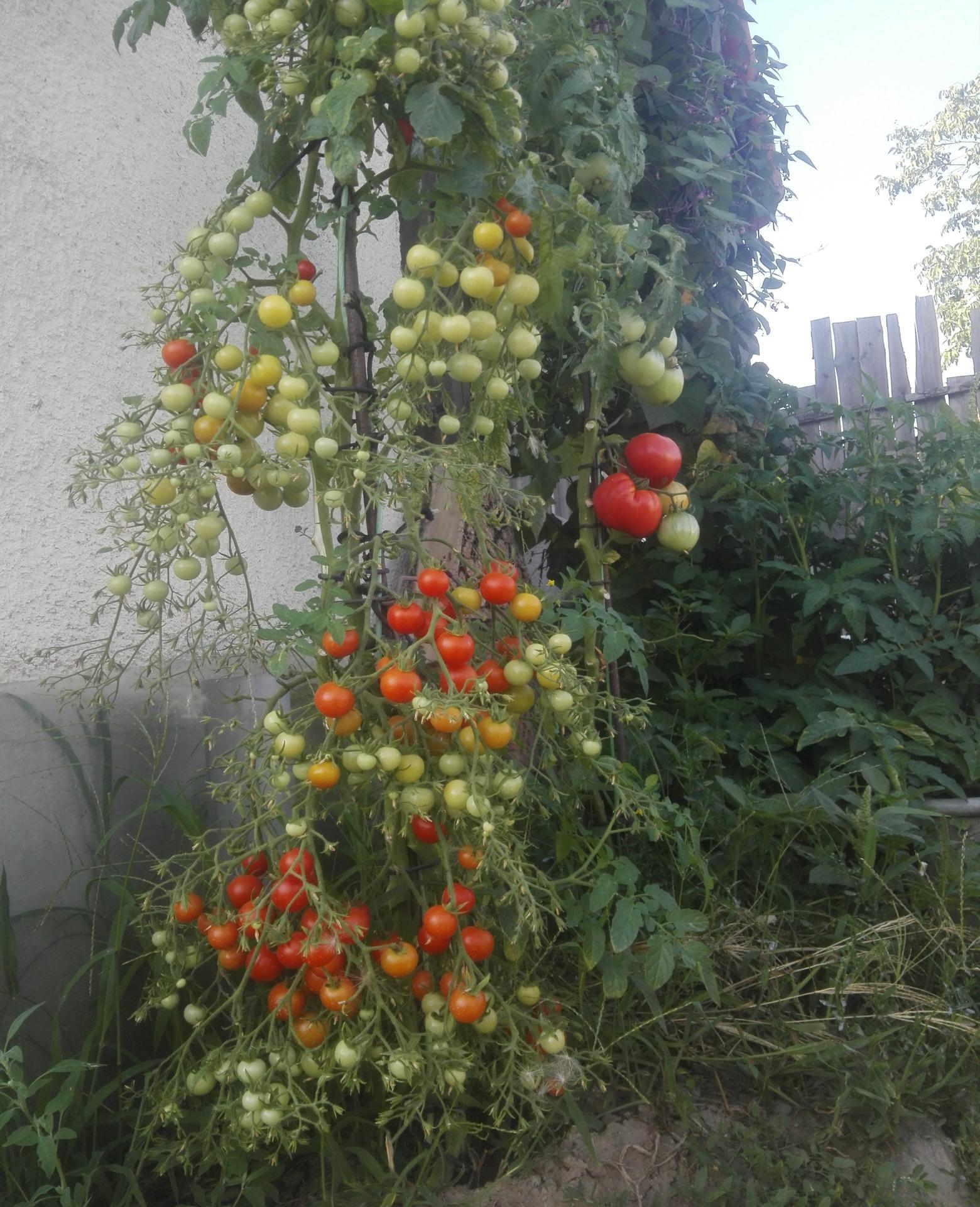 Moj rok v zahrade - Obrázok č. 9