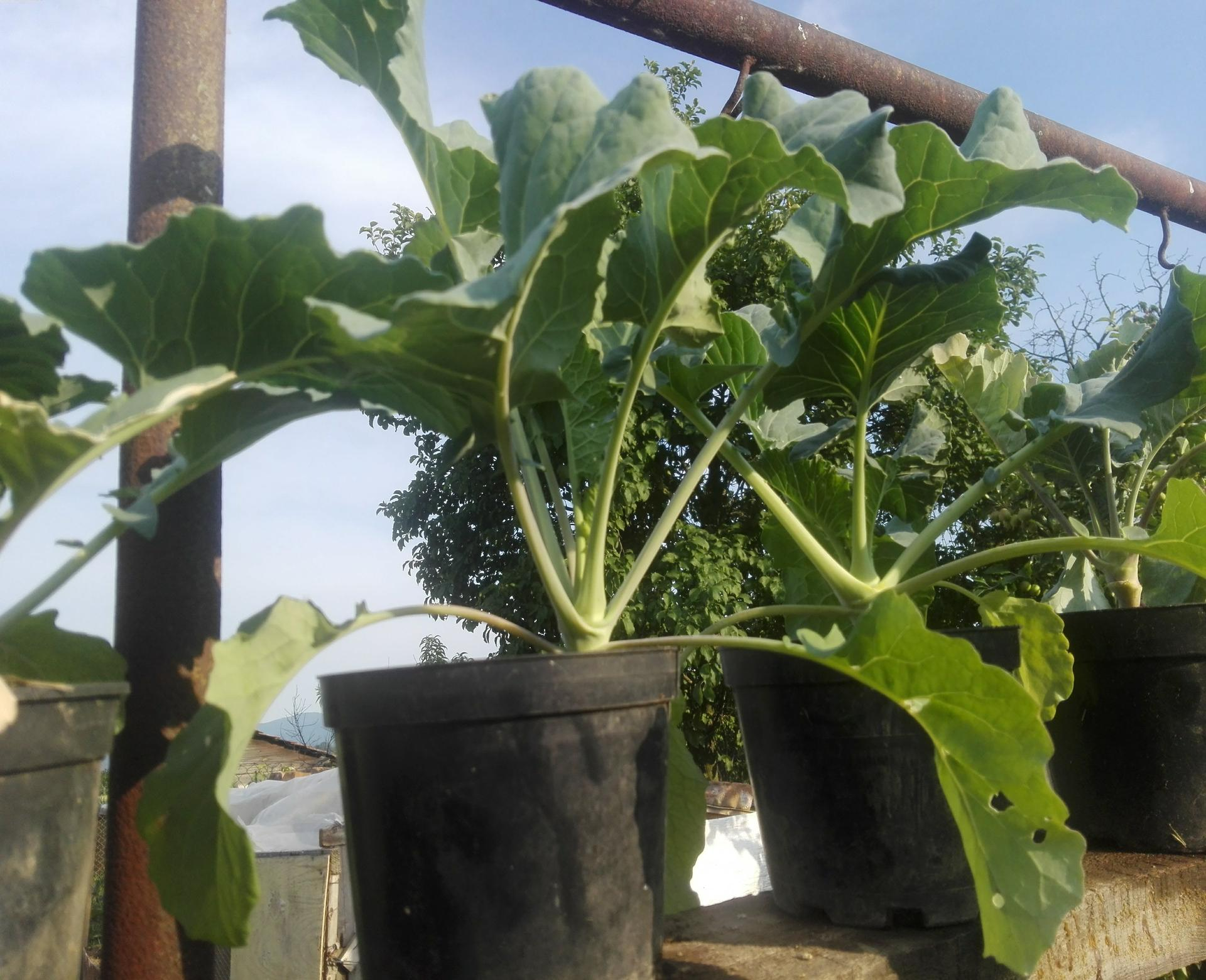 Moj rok v zahrade - Obrázok č. 18